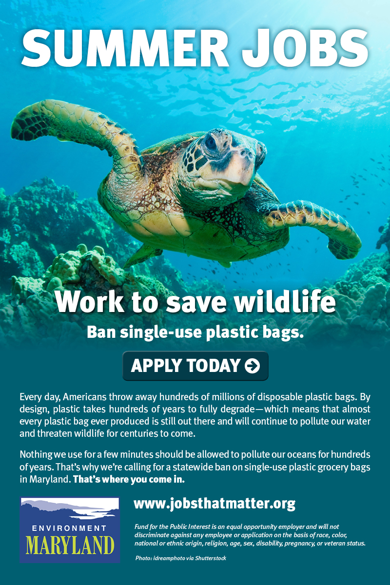 Summer jobs to ban single use plastic bags. APPLY TODAY.